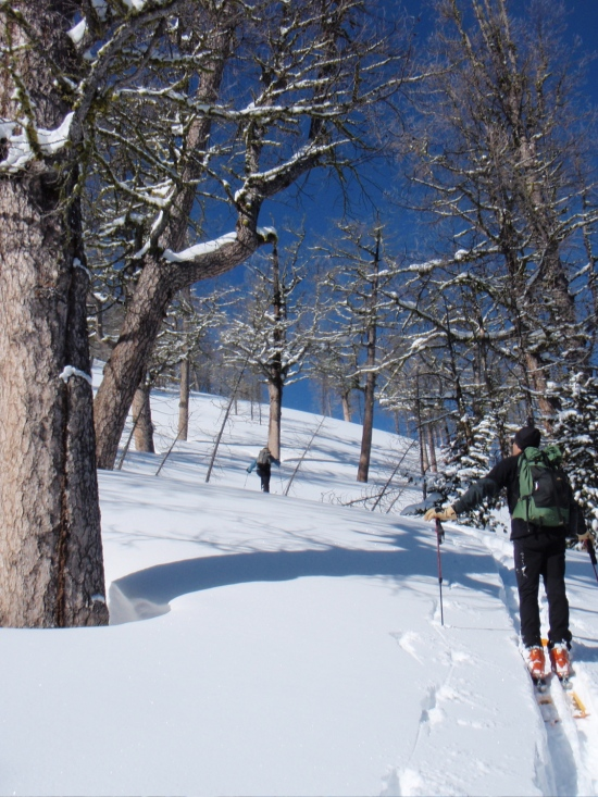 Skinning through the subalpine larch glades towards the high point.
