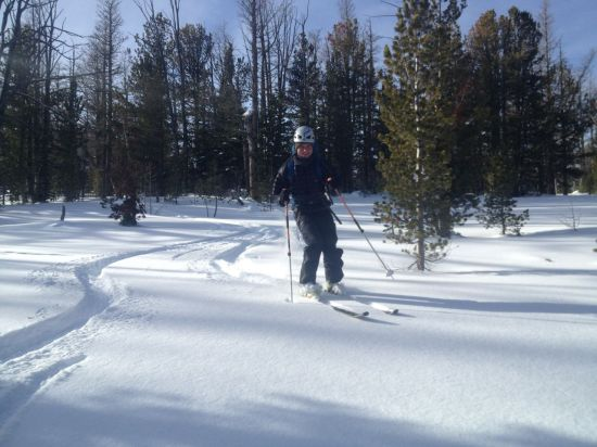 Skiing Wards Glades